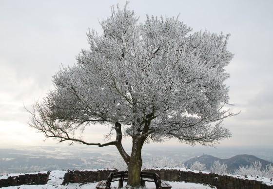 Winterreise.jpg